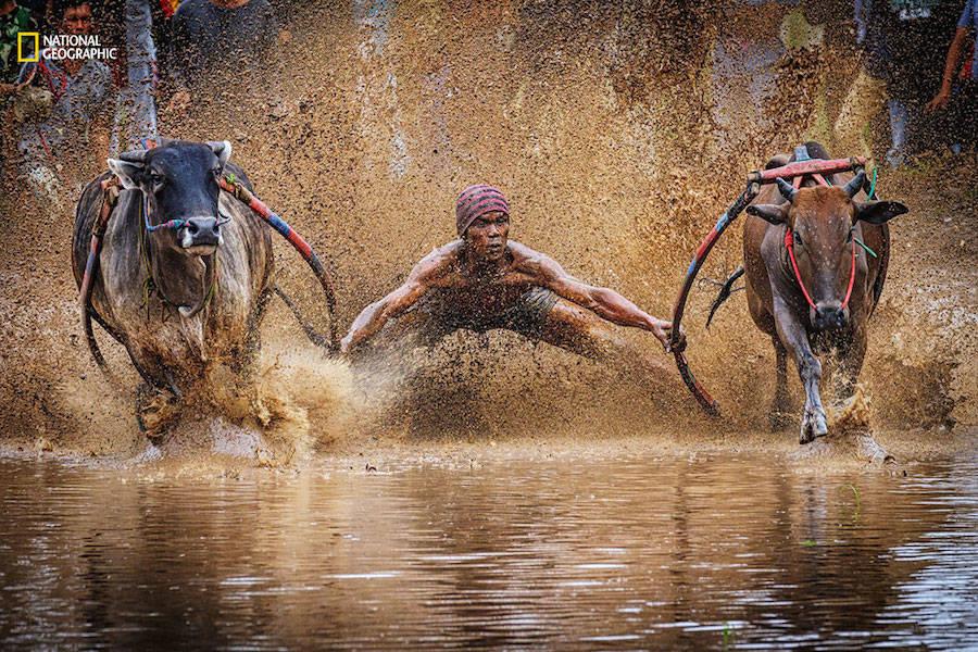Saíram As Fotos Participantes Do Concurso De Fotografia Da National Geographic De 2016