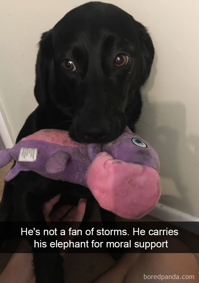 He's Not A Fan Of Storms. He Carries His Elephant For Moral Support