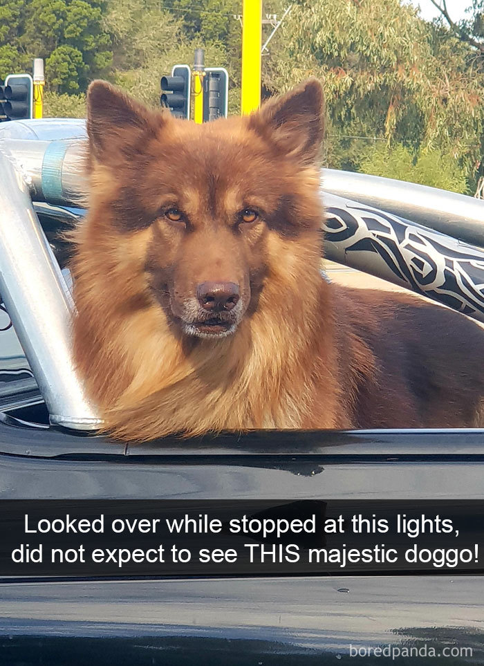 Looked Over While Stopped At This Lights, Did Not Expect To See This Majestic Doggo!
