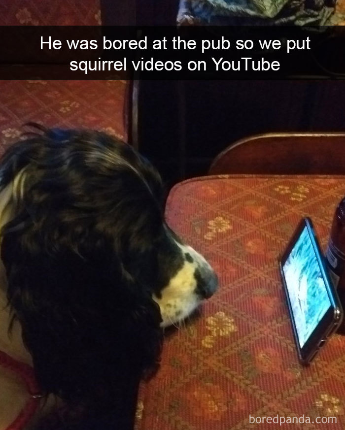 He Was Bored At The Pub So We Put Squirrel Videos On Youtube
