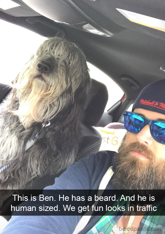 This Is Ben. He Has A Beard. And He Is Human Sized. We Get Fun Looks In Traffic