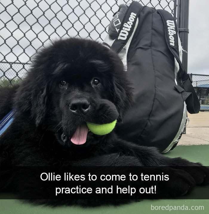 Ollie Likes To Come To Tennis Practice And Help Out!