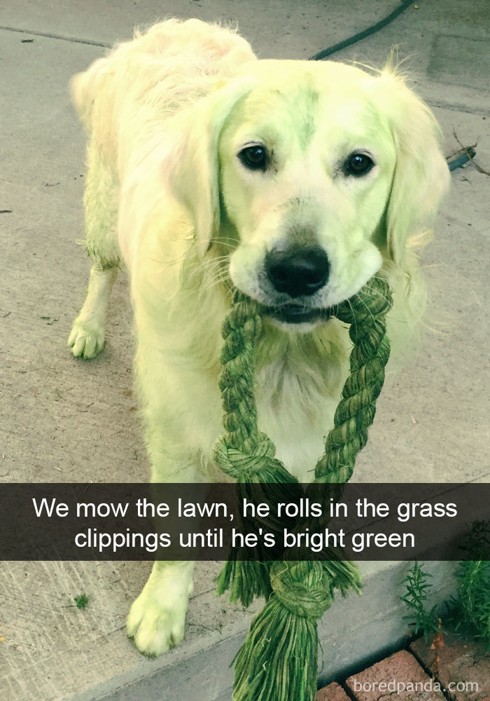We Mow The Lawn, He Rolls In The Grass Clippings Until He's Bright Green