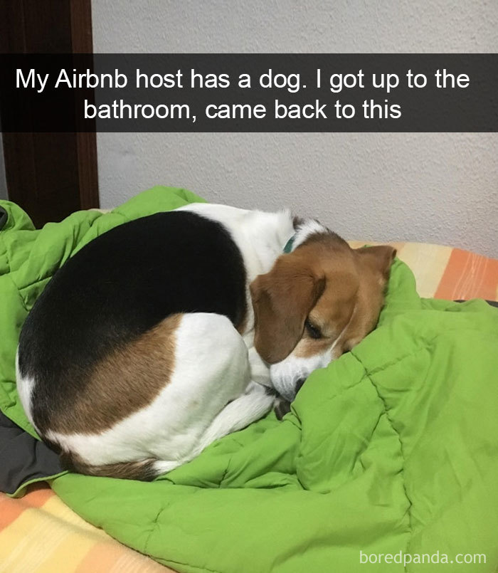 My Airbnb Host Has A Dog. I Got Up To The Bathroom, Came Back To This