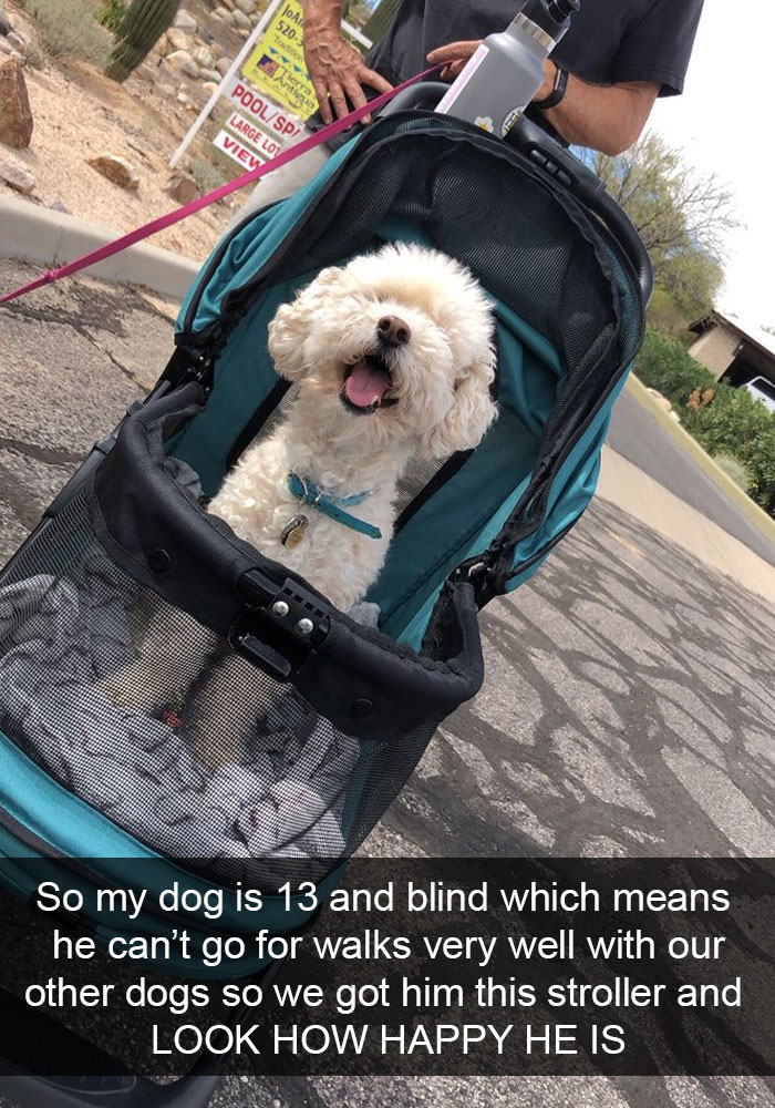 So My Dog Is 13 And Blind Which Means He Can't Go For Walks Very Well With Our Other Dogs So We Got Him This Stroller And Look How Happy He Is