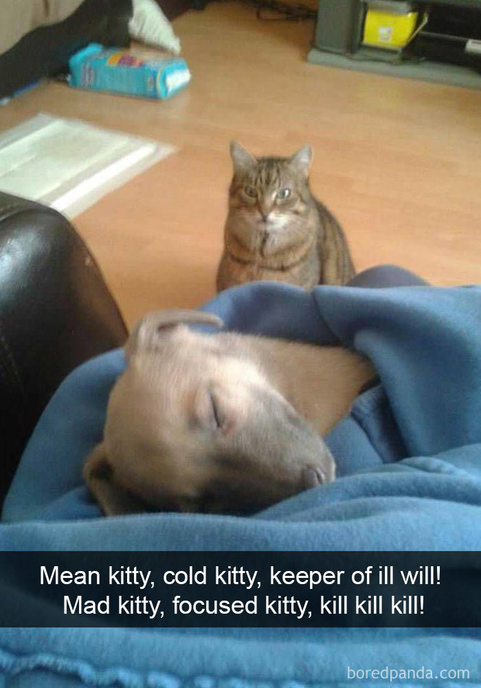 Mean Kitty, Cold Kitty, Keeper Of Ill Will! Mad Kitty, Focused Kitty, Kill Kill Kill!