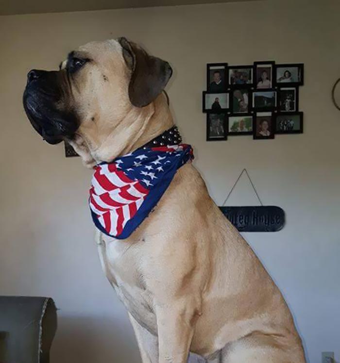 service-dog-psa-lumpatronics-26