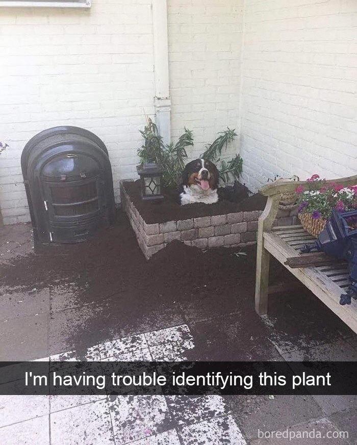 I'm Having Trouble Identifying This Plant