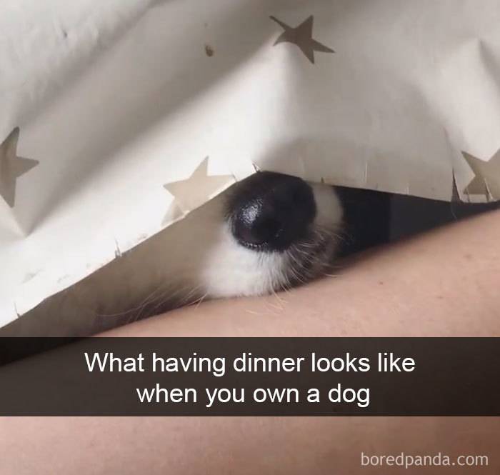 What Having Dinner Looks Like When You Own A Dog
