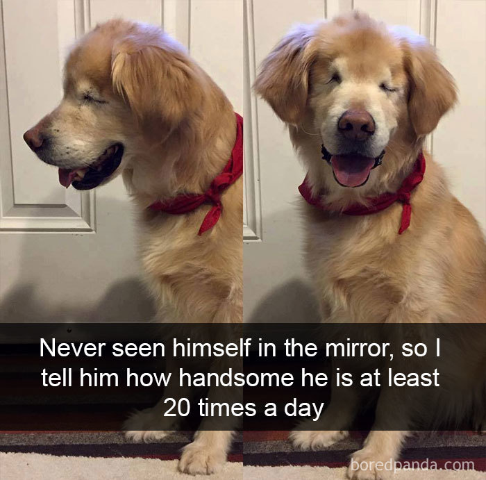 Never Seen Himself In The Mirror, So I Tell Him How Handsome He Is At Least 20 Times A Day