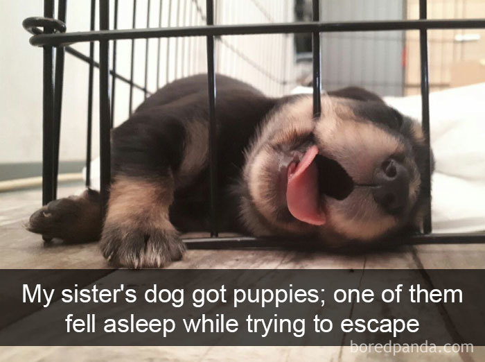 My Sister's Dog Got Puppies; One Of Them Fell Asleep While Trying To Escape