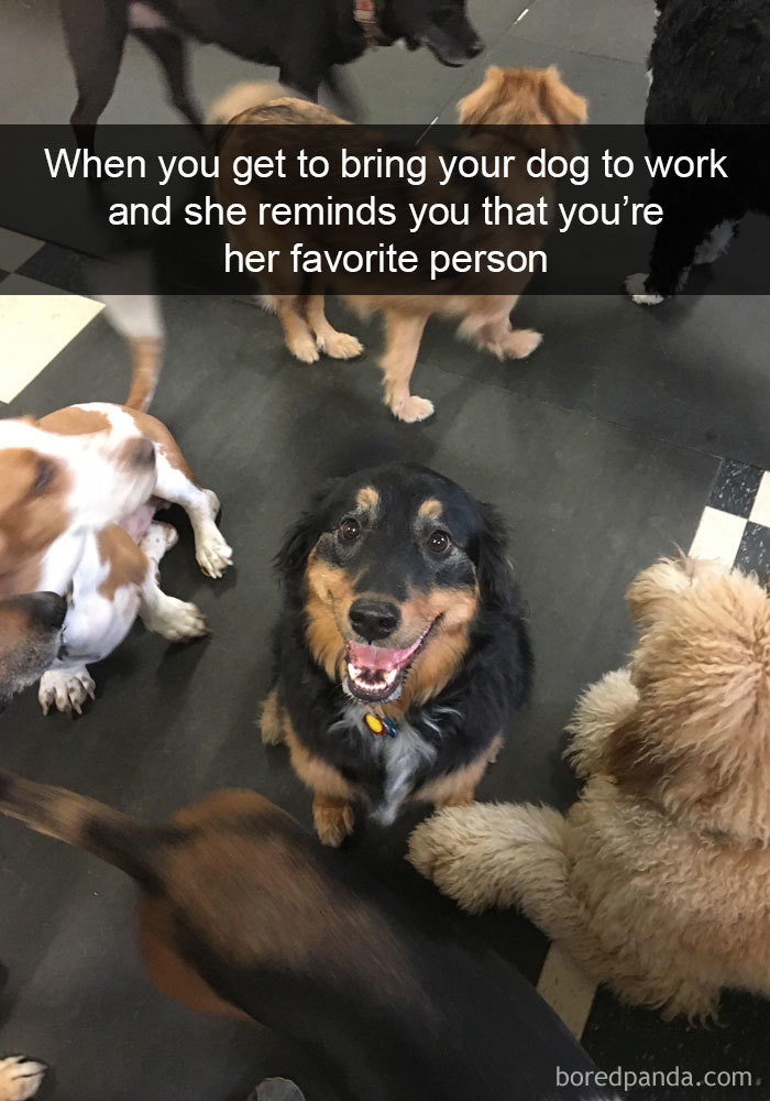 When You Get To Bring Your Dog To Work And She Reminds You That You're Her Favorite Person