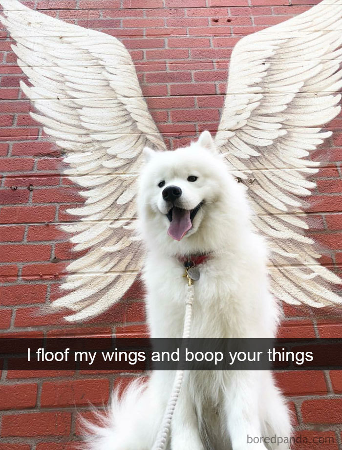 I Floof My Wings And Boop Your Things