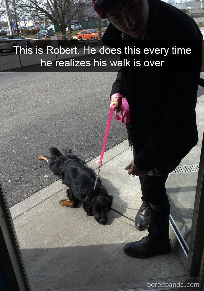 This Is Robert. He Does This Every Time He Realizes His Walk Is Over