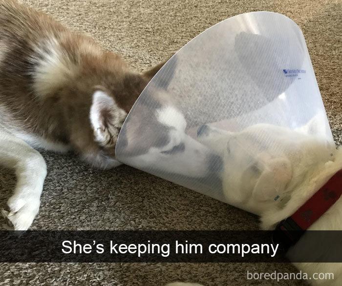 She's Keeping Him Company