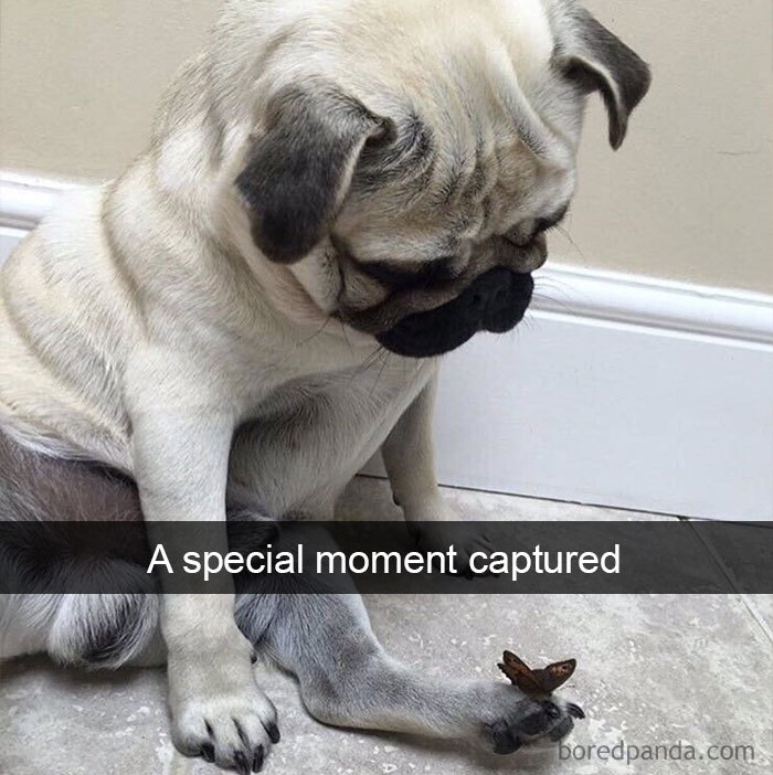 A Special Moment Captured