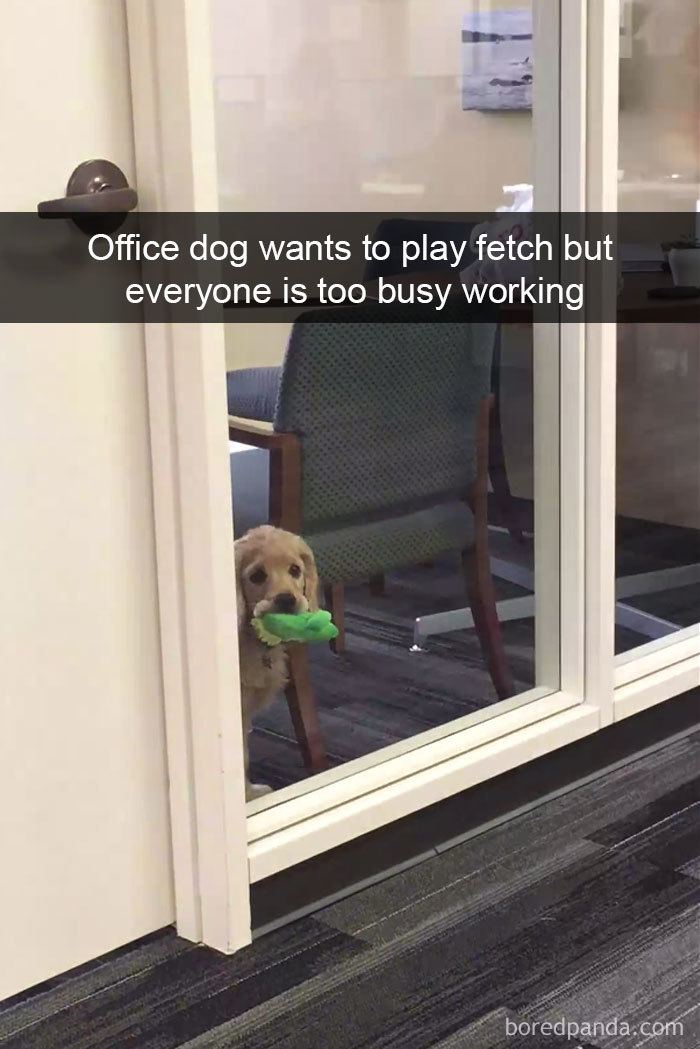 Office Dog Wants To Play Fetch But Everyone Is Too Busy Working