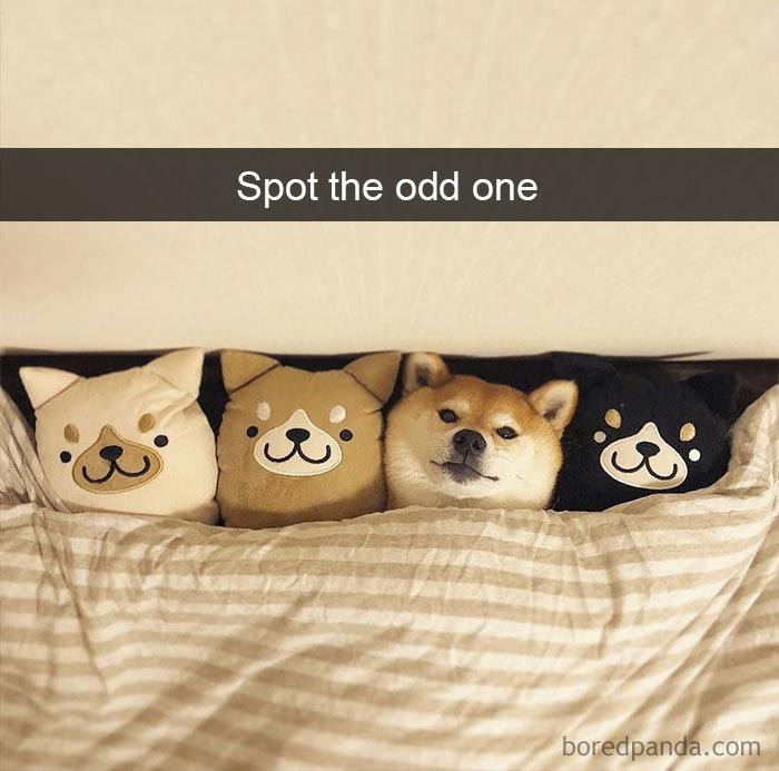 Spot The Odd One