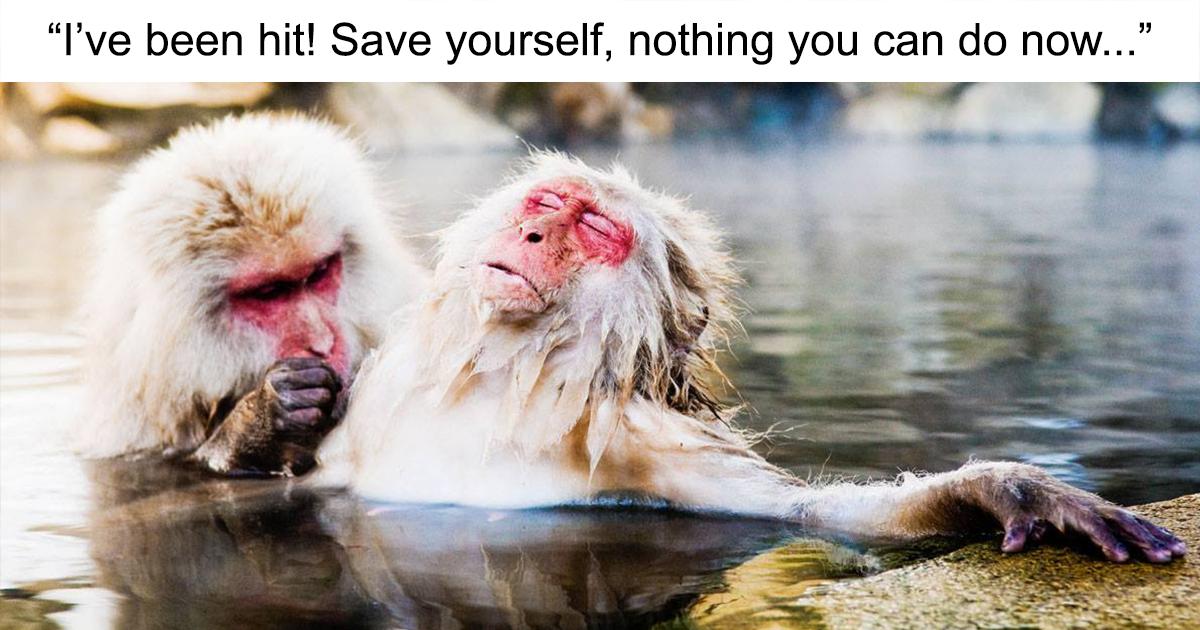 As melhores fotos para o Prêmio Comédia da Vida Selvagem 2018 até agora