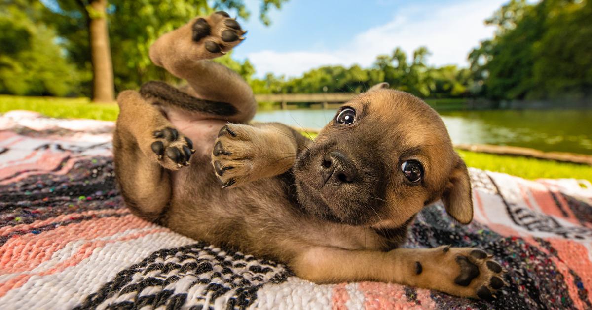 As melhores fotos de cães de 2018 foram anunciadas, e elas vão mexer com você