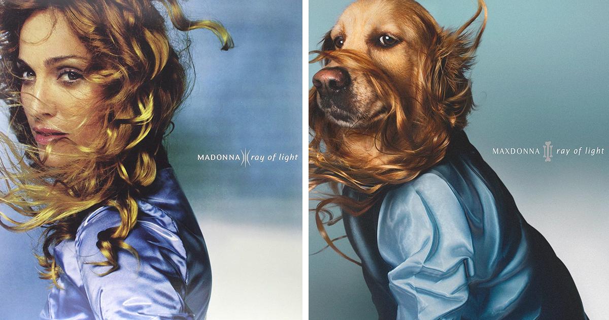 Conheça Max, o cão que recria os trajes de cenas icônicas de Madonna