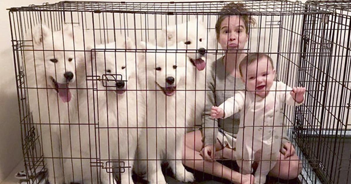 Esta mulher mostra como é criar 2 crianças e 4 samoiedas