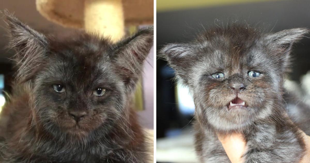 Esta gata com um rosto humano vai te impressionar