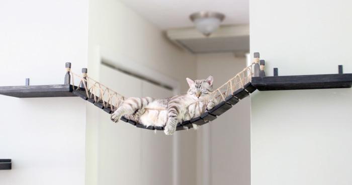 Nós criamos uma ponte estilo Indiana Jones para o nosso gato