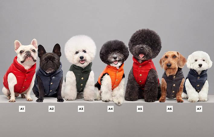 Casacos de luxo para cães pela marca Moncler