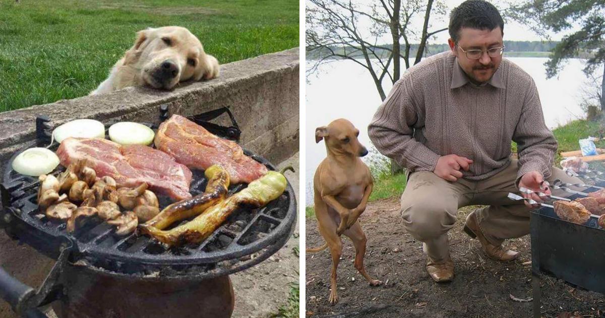 11 fotos engraçadas de cachorros implorando por comida