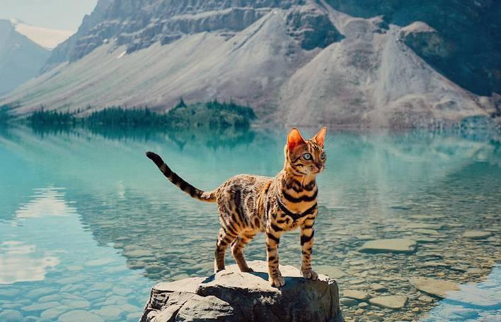 Siga as aventuras do aventureiro gato Suki