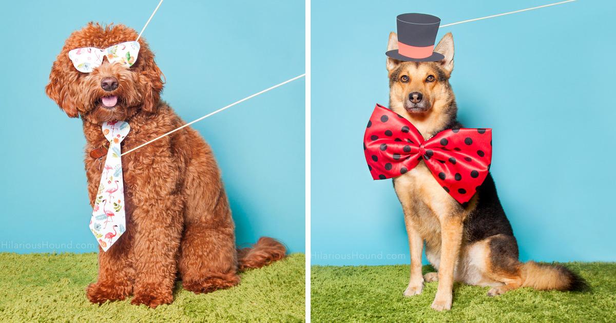 Estes 9 cães entraram numa cabine de fotos, agora divirta-se com eles
