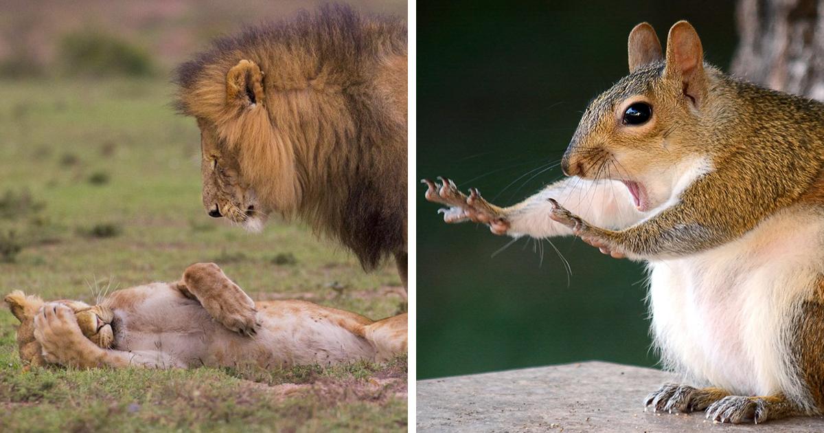 Saíram as fotos finalistas dos animais selvagens mais engraçadas de 2018, e elas farão seu dia