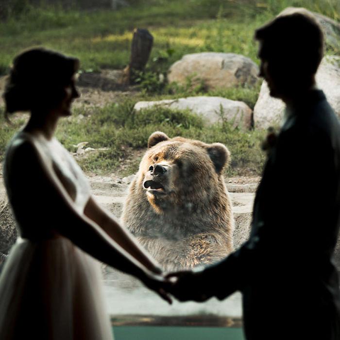 A reação deste urso a este casal que se casou no zoológico está viralizando na internet