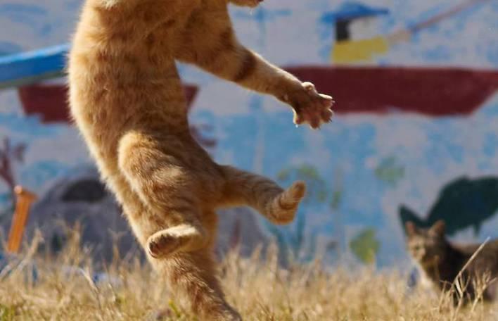 19 fotos divertidíssimas de gatos em poses de ninja