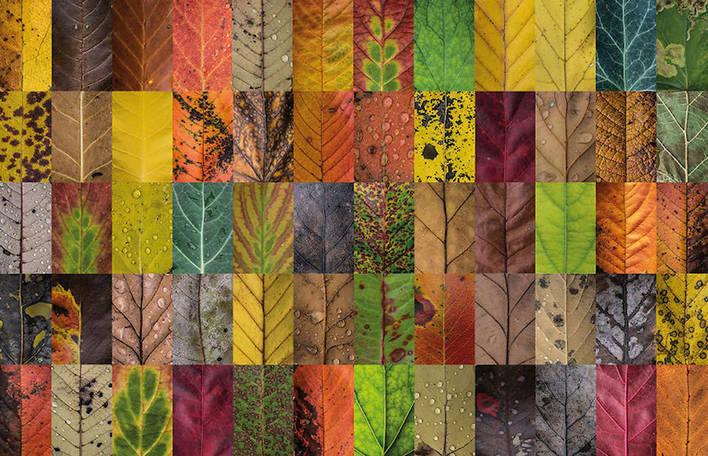 Centenas de folhas incrivelmente detalhadas