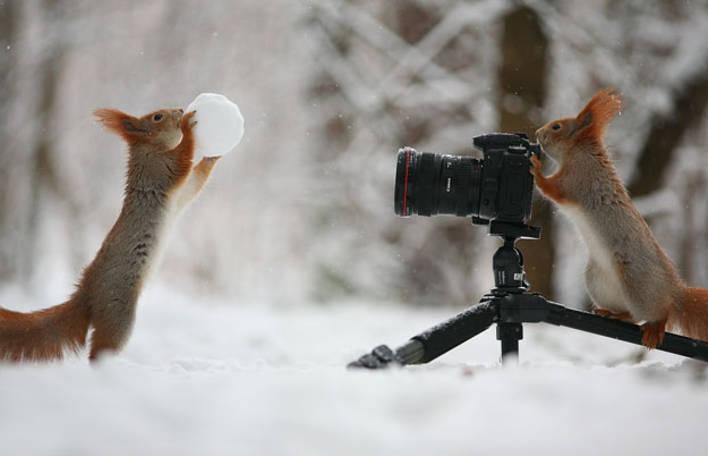 Estes esquilos conseguiram fazer a sessão de fotos mais fofa de todos os tempos