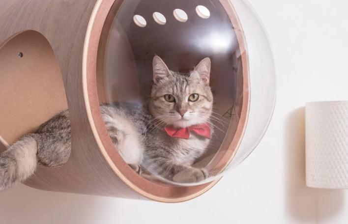 Para os amantes de gatos, camas para gatos inspiradas em nave espacial