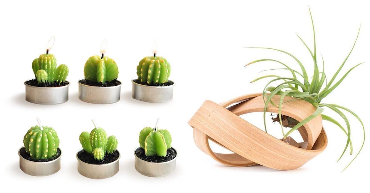 13 presentes com tema de jardim que são perfeitos para amantes de plantas