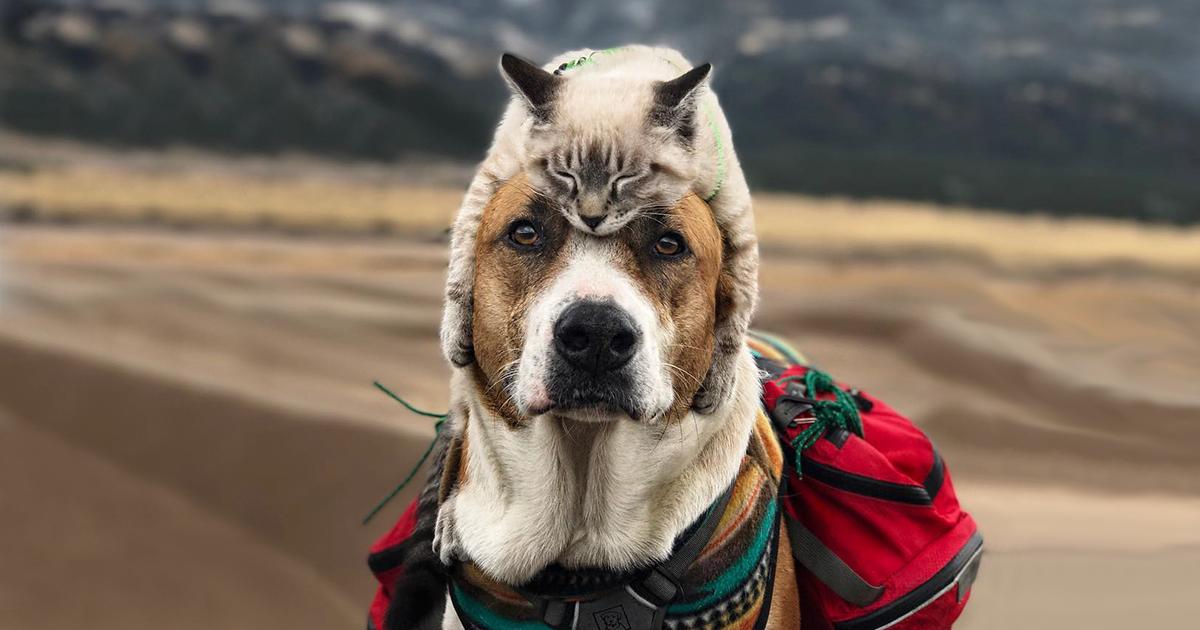 Este gato e este cão adoram viajar juntos, e suas fotos são absolutamente épicas
