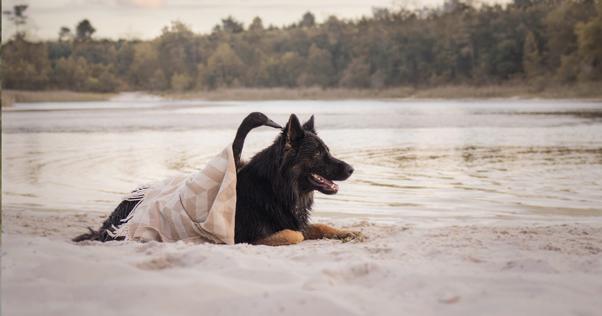 Fotos da amizade inesperada entre um cão e um pato