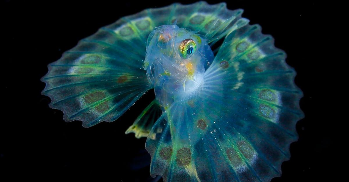 Fotógrafo subaquático passa 20 anos capturando fotos de plâncton microscópico