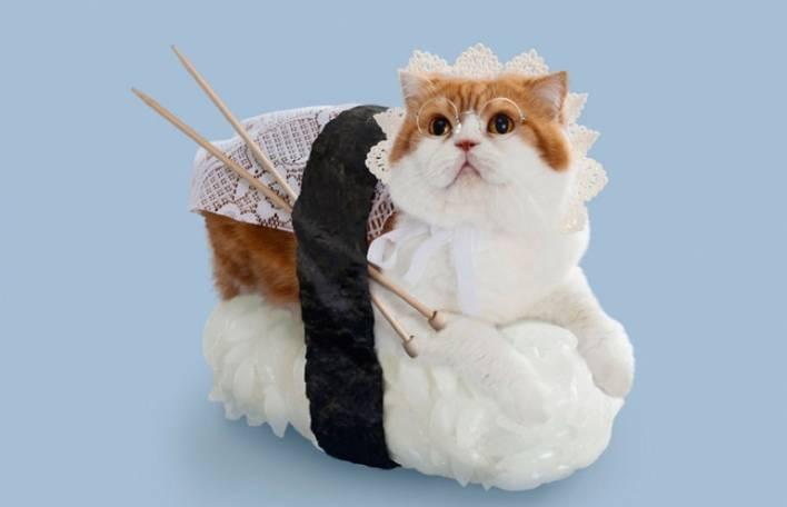 11 gatos vestidos como sushi