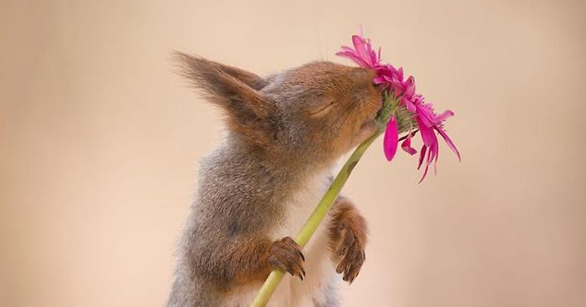 Fotógrafo passou 6 anos seguindo esquilos diariamente com sua câmera e aqui estão algumas das melhores fotos