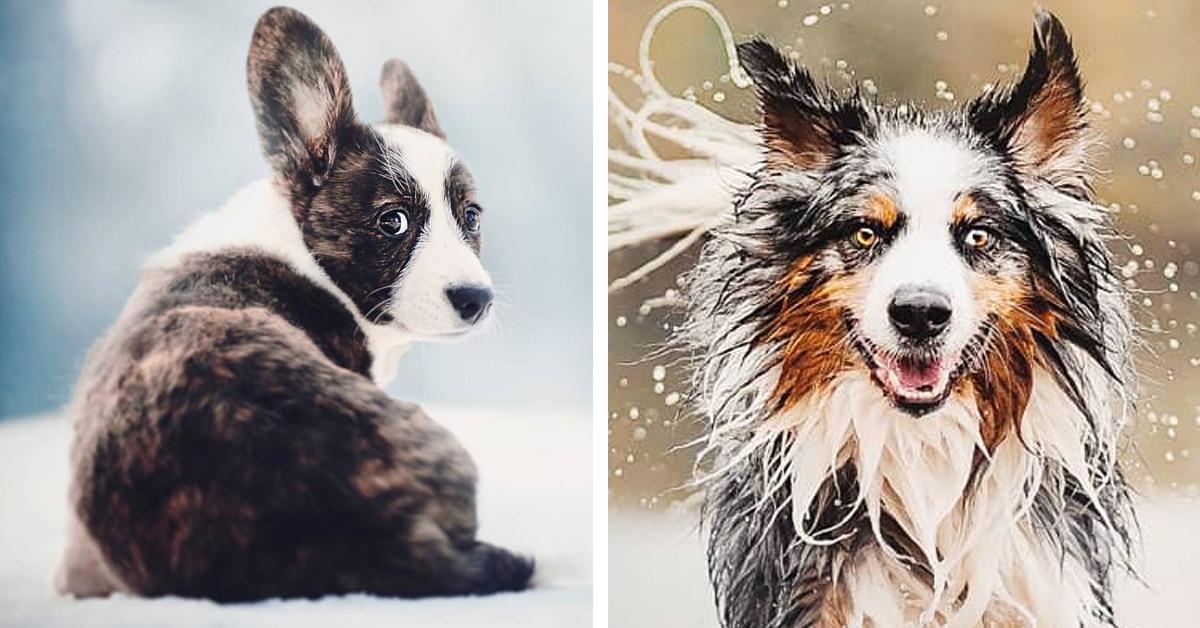 17 retratos belos que mostram as diferentes personalidades dos cães