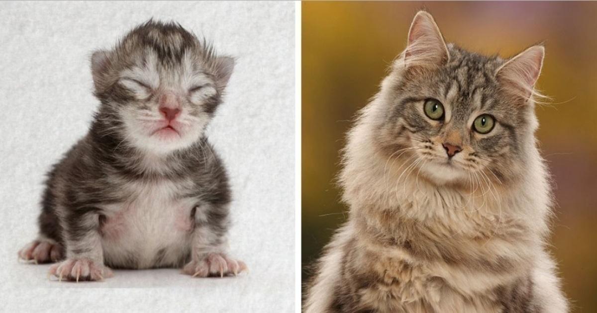 Fotógrafo mostra o crescimento de gato em time-lapse e o resultado é lindo (vídeo)