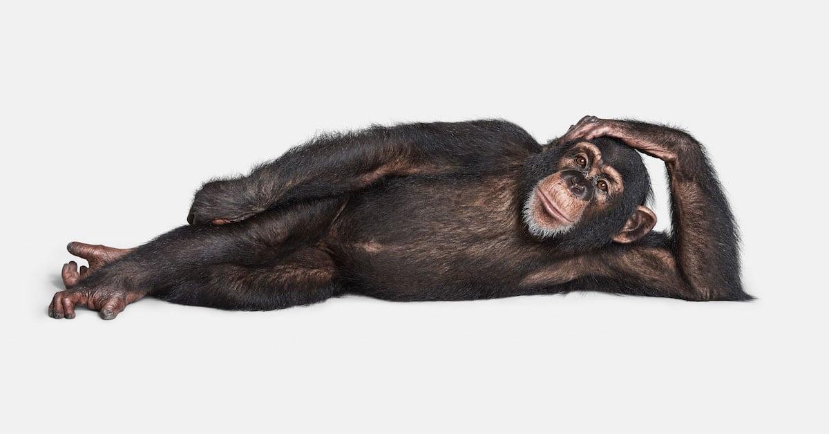 Retratos simples revelam as personalidades únicas do reino animal