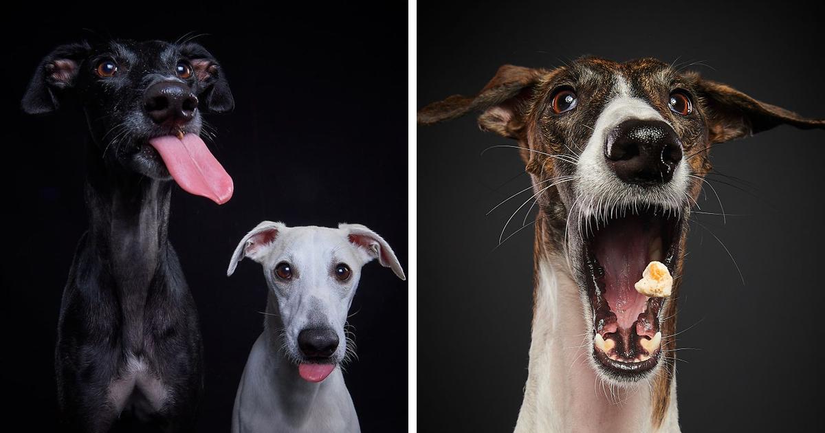 25 fotografias que fazem homenagem aos cães de caça da raça Galgo