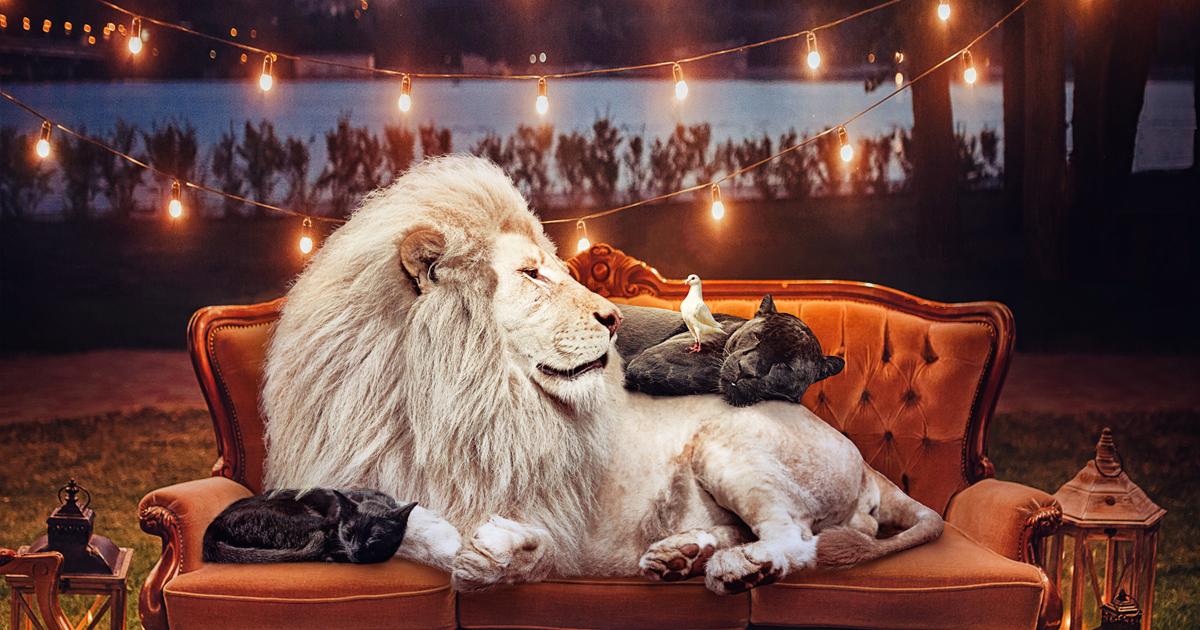 16 impressionantes retratos de animais que nos alertam para espécies ameaçadas