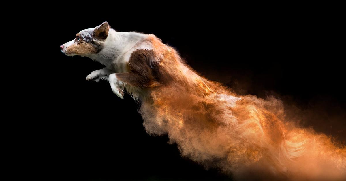 Fotógrafo joga pó em alguns cachorros, e o resultado ficou incrível (13 imagens)